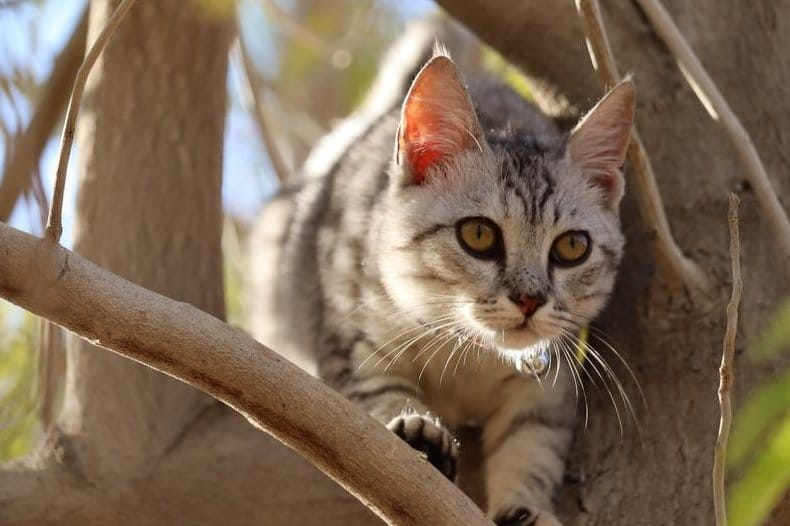 snap shot of cat in tree using canon camera with 55-250mm STM lens