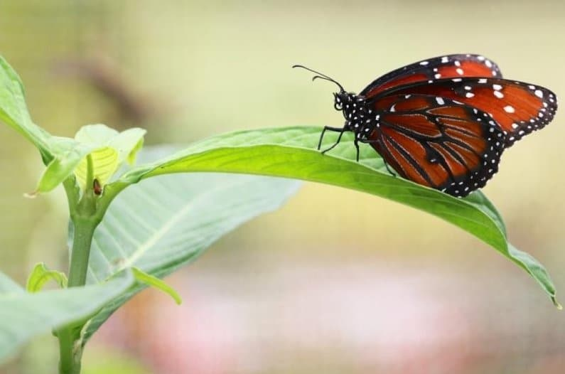 Image of butterfly using the new Canon 18-135mm STM Lens